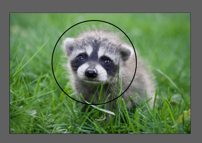 How to Crop an Image in Illustrator 15