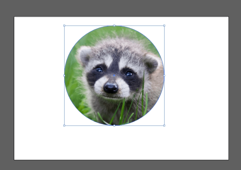 How to Crop an Image in Illustrator 18