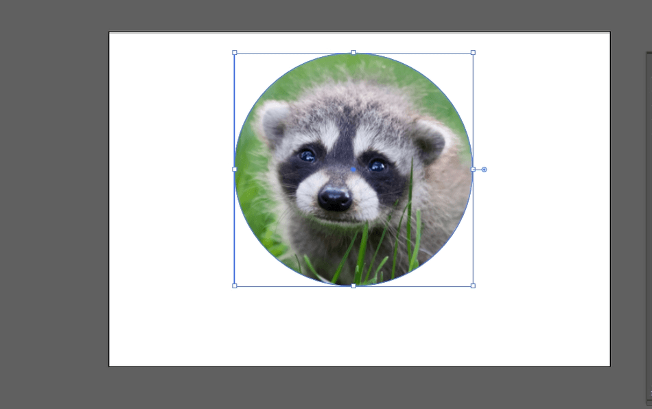 How to Crop an Image in Illustrator 21