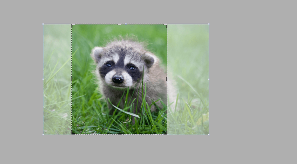 How to Crop an Image in Illustrator 5
