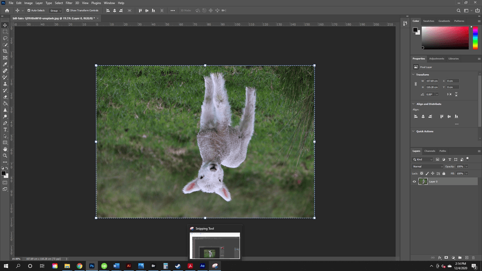 How to Flip an Image in Photoshop 7