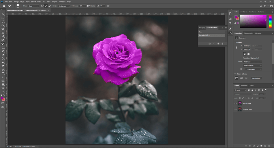 How to Resize a Layer in Photoshop 52