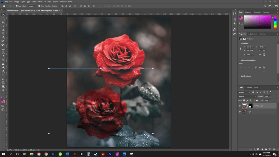How to Resize a Layer in Photoshop 56