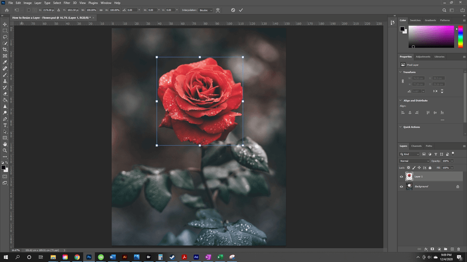 How to Resize a Layer in Photoshop 6